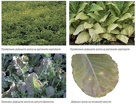 Листьях соответственно плоды которые расположены дальше стебля растения меньшей степени